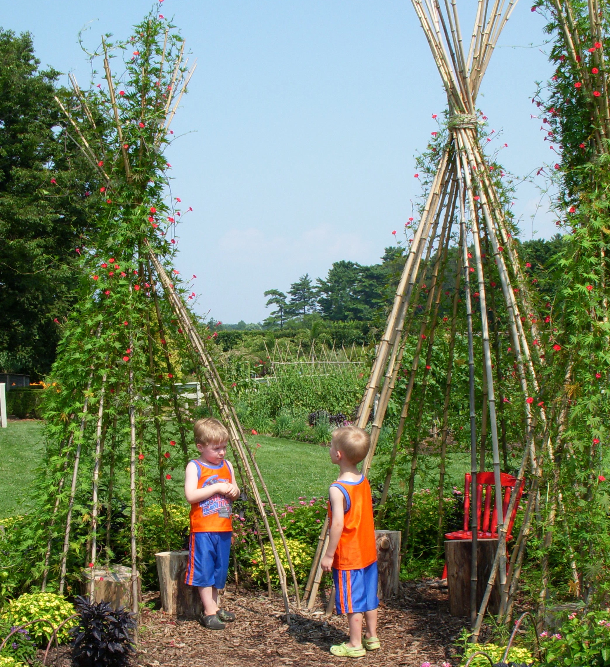 Best 25 Teepees Ideas On Pinterest: Kids Gardening: Build A Bean Teepee